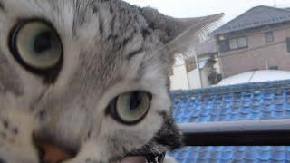 初雪…突風が吹くたび母ちゃんに抱きついて怯える猫 -Cat hold me tight ,scared of the snow thumbnail