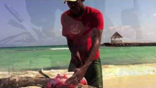 Scaling And Gutting A Red Snapper On The Beach At Silver Sands Jamaica