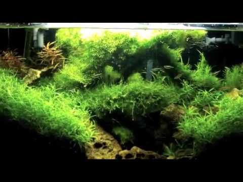 what filtration to use in a planted aquarium what filtration media to use  in a planted fish tank