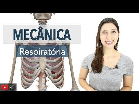 Sistema Respiratório 5/6: Mecânica Respiratória, Músculos Acessórios e Hematose | Anatomia e etc