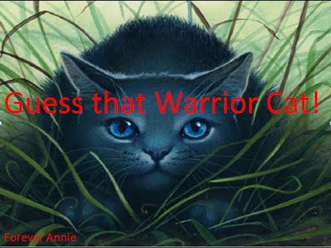 Guess that Warrior Cat! #1