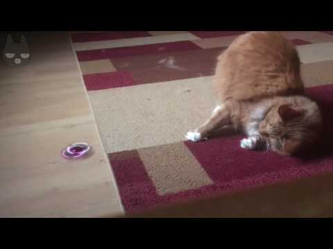 Cat Plays with Fidget Spinner Compilation