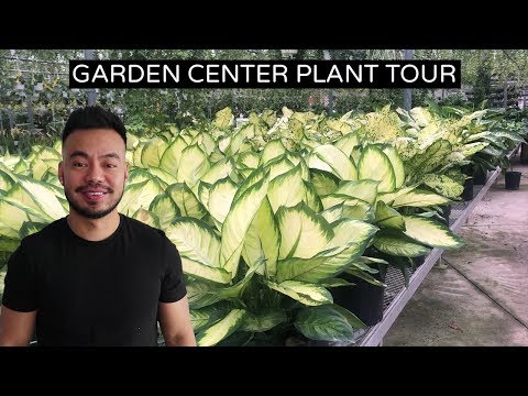 Relax and Enjoy This Houseplant Tour | Garden Center Edition