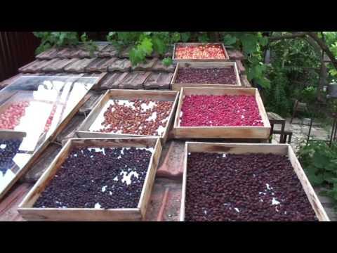 Как сушить ягоды в домашних условиях