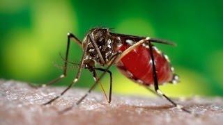 Наиболее опасное насекомое