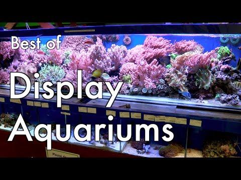 Best Of Display Aquariums 2015