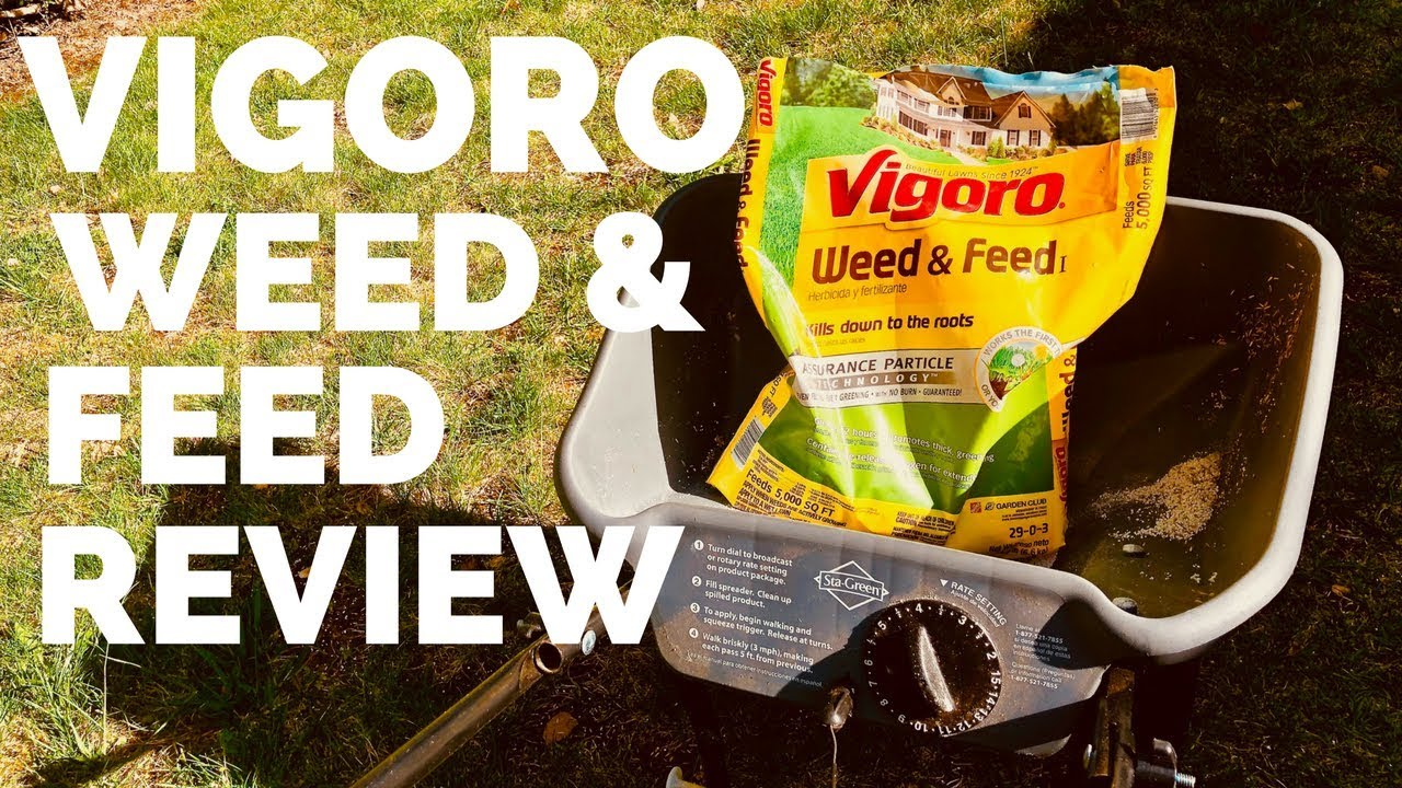 Vigoro Weed And Feed Review - Lawn Before and After