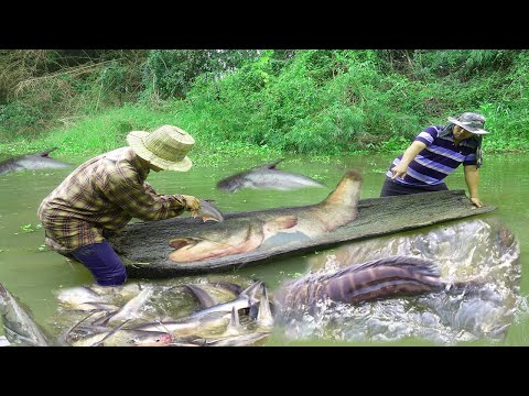 Excellent Traditional Fishing And Catching Big Fish In The River For Raining Season