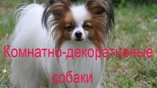 Породы собак: Комнатно-декоративные