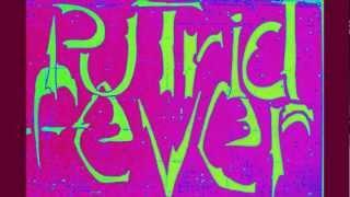 Putrid fever - Rats