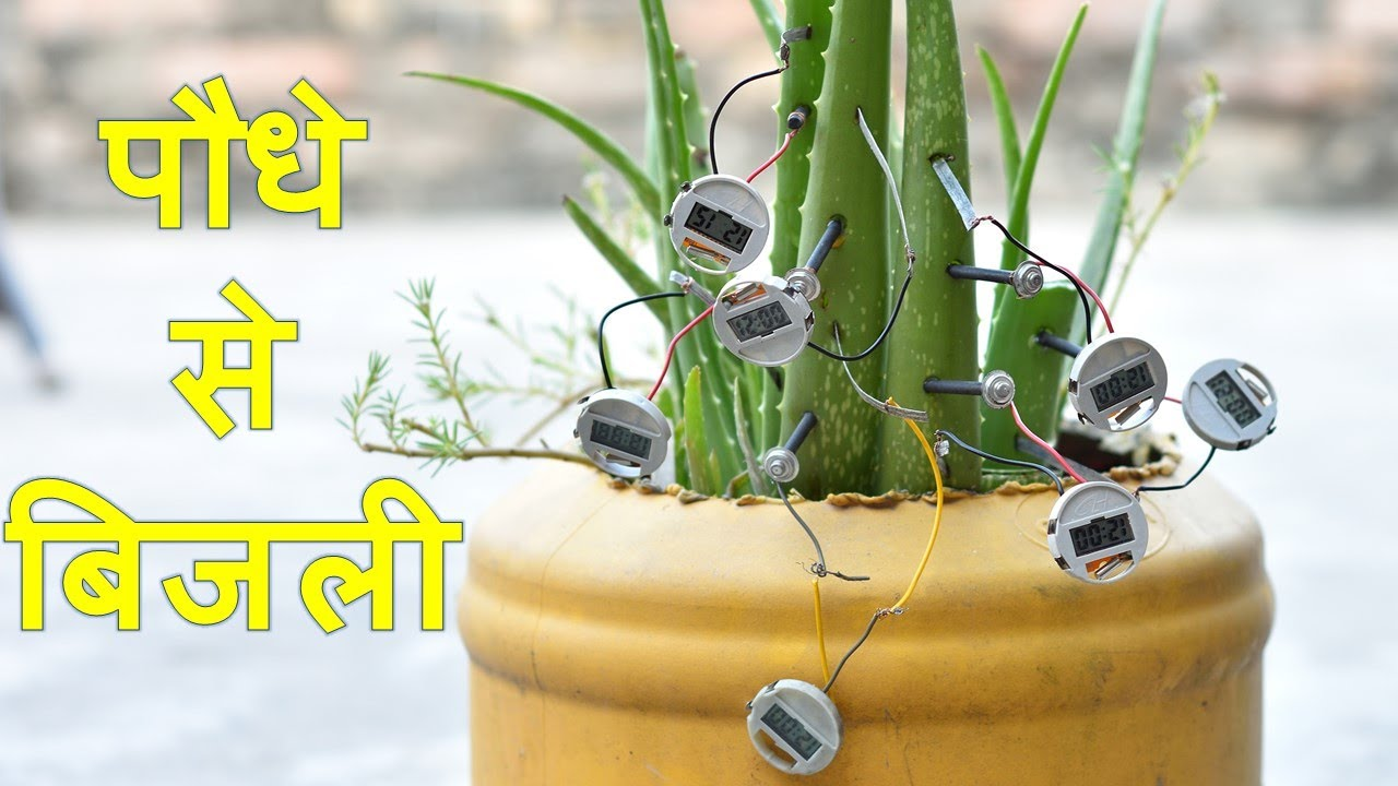 इस पौधे ने किया कमाल ( Harvesting Electricity from Plants and Trees)