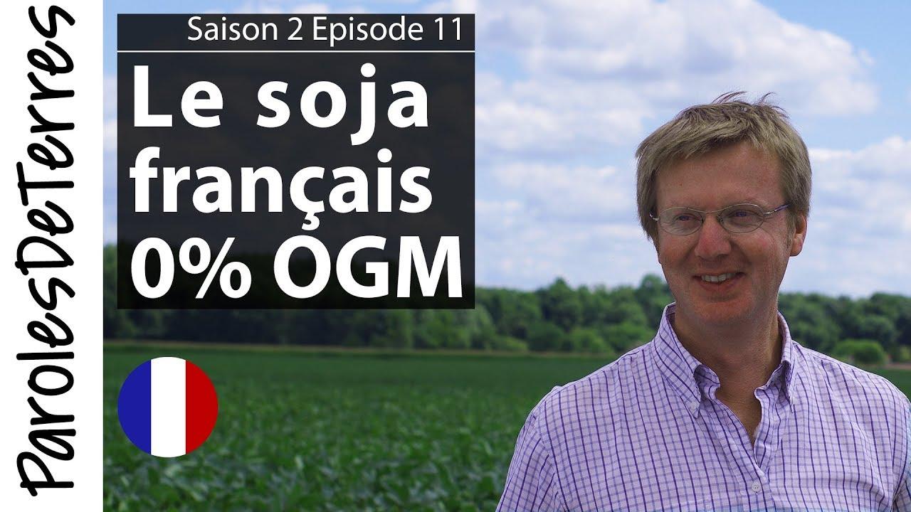 Comment naissent les semences de Soja ?