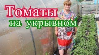 Томаты в открытом грунте. Сравниваем томаты на укрывном и замульчированные.