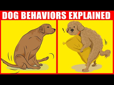 The Meaning Behind 21 Strangest Dog Behaviors | Jaw-Dropping Facts About Dogs