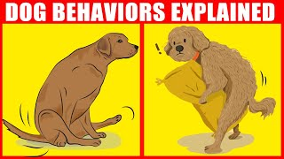 The Meaning Behind 21 Strangest Dog Behaviors | JawDropping Facts about Dogs