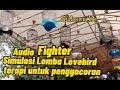Simulasi Lomba Lovebird Ampuh Melatih Mental Cocok Untuk Terapi  Mp3 - Mp4 Download