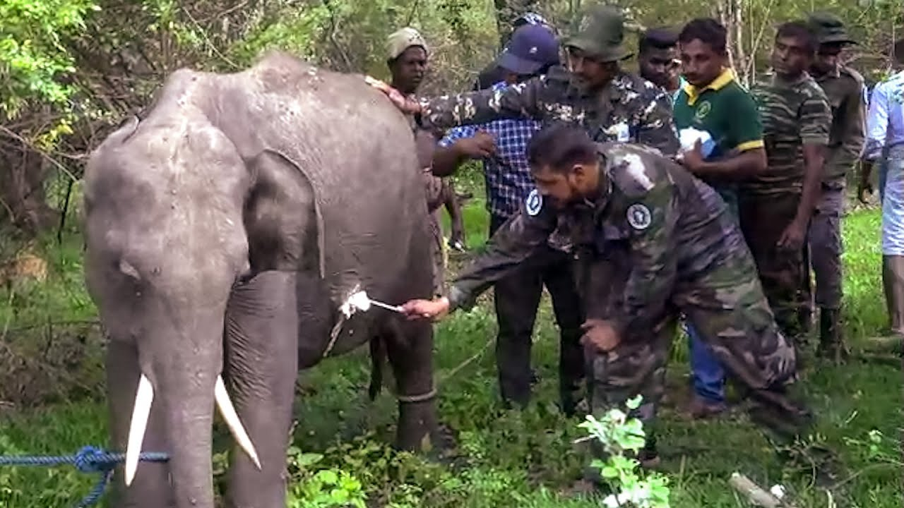 Helping a injured baby elephant,using a proper treatment