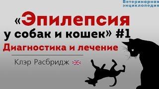 Эпилепсия у собак и кошек. Диагностика и лечение. Epilepsy in pets