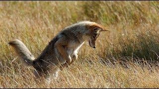 Живое оружие Собачий нюх на передовой Боевое использование животных Методы дрессировки Особый пёс