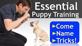 PUPPY TRAINING a 16 Week-Old FRENCH BULLDOG!