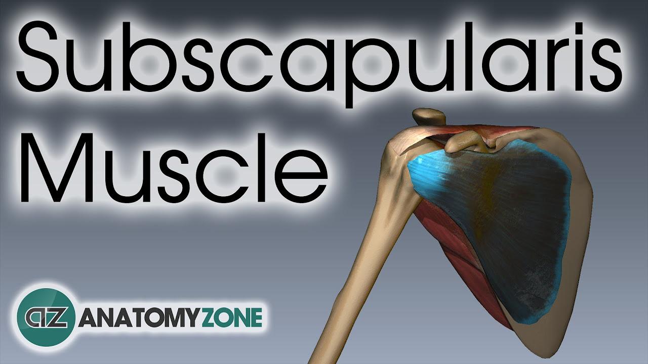 Anatomyzone youtube gaming ccuart Choice Image