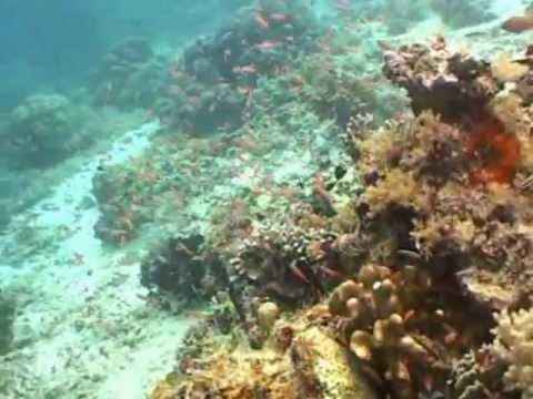 Diving Sipadan Malaysia 2011