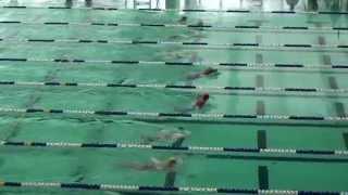 2014-15新界區小學界游泳比賽男乙50蛙式決賽