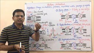 Gambar cover Action Potential- Depolarization + Repolarization + Hyperpolarization. General Introduction. Hindi