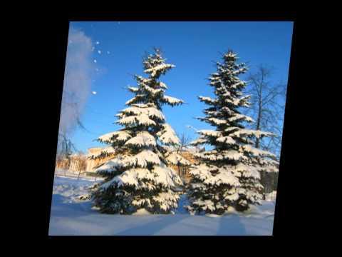 Снег и ёлки (минус) - Дилижанс - радио версия