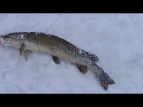 Ice fishing pike on lake gogebic 2016 youtube for Lake gogebic ice fishing