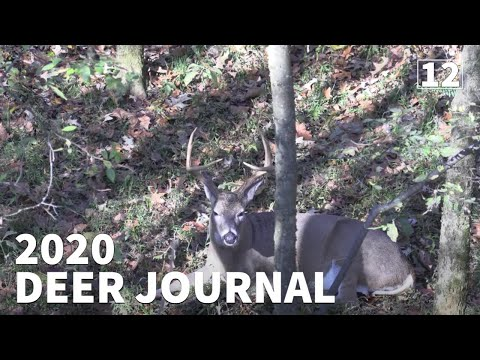SWIMMING & BEDDED BUCKS...HUNTING KENTUCKY PUBLIC LAND- 2020