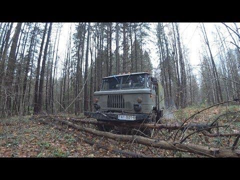 Катались по лесу