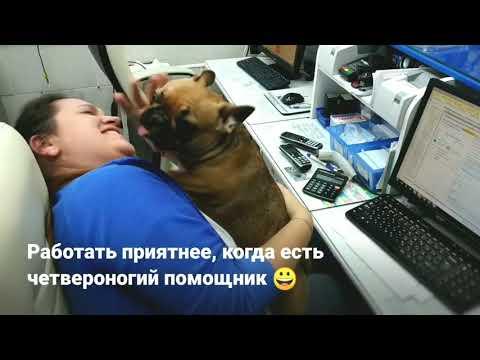 Трудовые будни администратора ветеринарной клиники😎