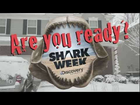 MattForSharkWeekHost.com - Are You Ready for SHARK WEEK?