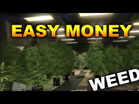 WEED FARM | How to make easy money without doing anyting | gta 5