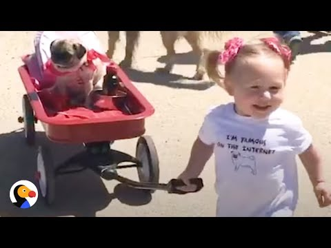 ADORABLE Girl and Pugs Grow Up Together | The Dodo