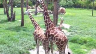 Sex-Ed at the Zoo?