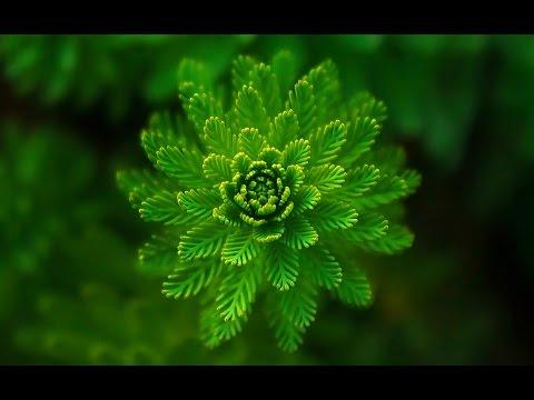 4 Hour Theta Binaural Beat   (4)   Healing and Rejuvenation