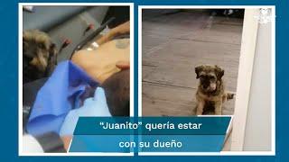 Perrito persigue ambulancia que llevaba a su dueño tras sufrir accidente; paramédicos lo suben