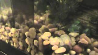 Eheim Quickvac Pro Aquarium Gravel Cleaner Full Review