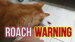 Japanese Cockroach FREEZING SPRAY
