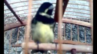 COLEIRO COISA RUIM CRIADOR ALLAN FRAGA thumbnail