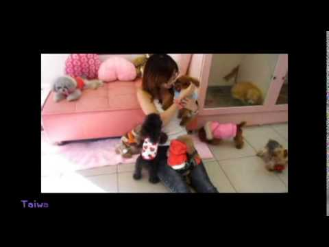 Various Color Adult Teacup Teddy Bears Poodles 1-1 from YouTube · Duration:  1 minutes 14 seconds