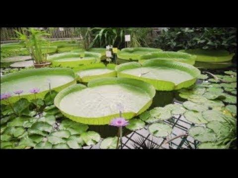 Gartenimpulse Botanischer Garten Jena Youtube