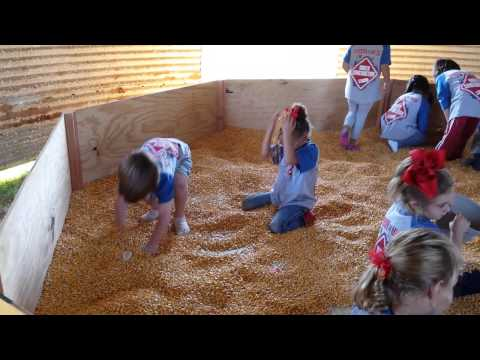 Kids playing in corn @ The Pumpkin Patch