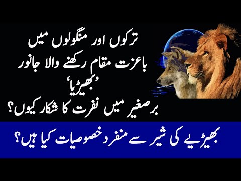 Wolf And Lion Interesting Facts | Why Wolves Are Hated In Eastern Countries?