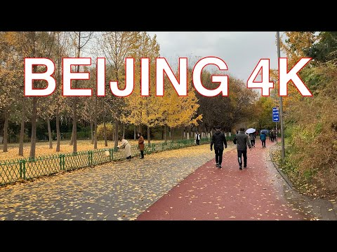 Beijing 4K - Walk at Olympic Forest Park - Beijing - China 中