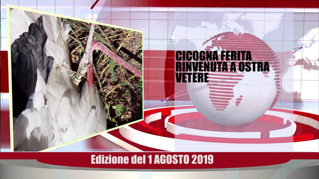 Velluto Senigallia Tg Web del 01 08 2019