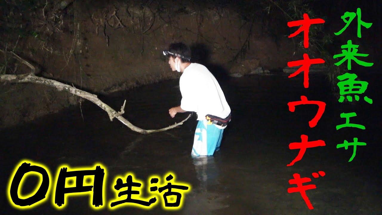 暗黒の川で外来魚をエサにしてオオウナギを狙う【沖縄北部0円釣り生活4話】