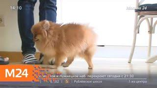 Москвичка подозревает ветклинику в неправильном лечении своего питомца - Москва 24